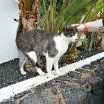 the local cat who gets spoiled by the staff