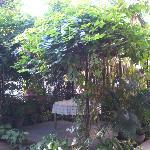 verdant garden gazebo