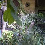 verdant garden