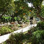 Un pezzo del giardino