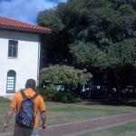 Courthouse & banyan tree