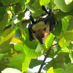 Fruit Bats everywhere!