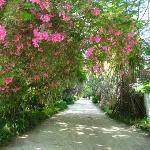 flora and fauna....
