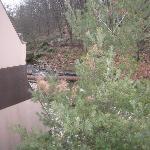 stream side