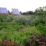 solar panels and the herb garden
