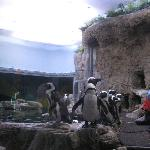 Feeding of Penguins