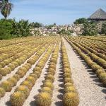 Foto de Wirikuta Garden