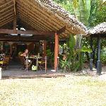 Au frais sous les palmes coco