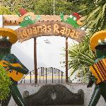 Iguanas Ranas Aljarafe