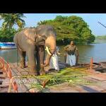 Elephant on a Ferry