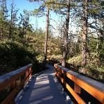 botanical board walk trail