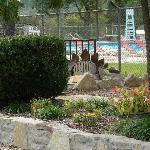 Oakdale Dinosaur & Pool