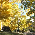 Fall at 7000 ft - Aspen gold