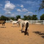 Caballos Rancho de Macanao