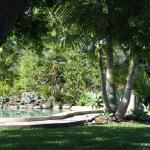 poolside gazebo and lovely big shade tree