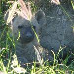 """At that age even hyenas get """"look, how sweet"""""""