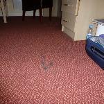 Shabby carpet