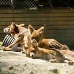 Skaerup Zoo