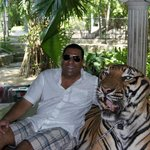 With a real Tiger, no walls or a cage.