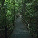 Nature walk, beautiful.