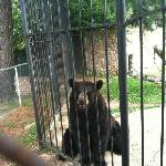 Bear was very active with its visitors and loved peanuts
