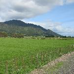 Hauraki Rail Trail through farm fields
