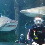"""My friend meets """"Patches"""" the shark"""