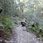 trail to berry creek