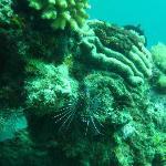 Photo de Dive-Hub-Antulang