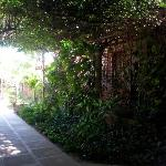 autre coin du jardin, à l'ombre