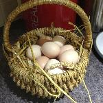 Our basket of fresh eggs