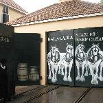 Novel painting on garage doors
