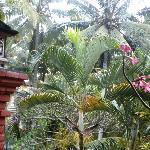 at bo på en træklædt skråning midt i Ubud