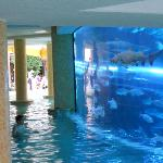 shark tank incorporated into pool area