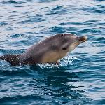 Baby dolphin mid-jump