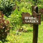 Check out the Herbal Garden - with explanations of the various uses of the plants