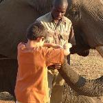 Feeding peanuts to the elephant