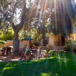 Morning sunrays -garden & patio dinning