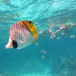 Beautiful fish in crystal clear water!