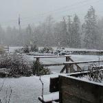 Winter at the Pacific Rim Visitor Centre