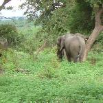 Auf der Safari-Fahrt_4