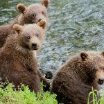 spring cubs!