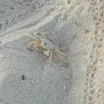 Crab buddy!