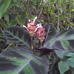 Grogeous tropical flower