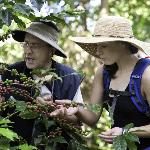 Tour through the organic coffee field