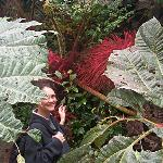 Walking in the Barva cloud forest