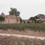 Surrounding vineyards