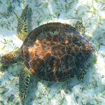 Followed several turtles around while snorkeling