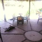 The dogs have the right idea-- midday under the restaurant palapa