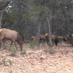 Elk on the tour